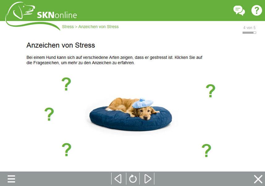 Online Hundeschule, Sachkundenachweis Hund, SKN Kurs, Hundekurs