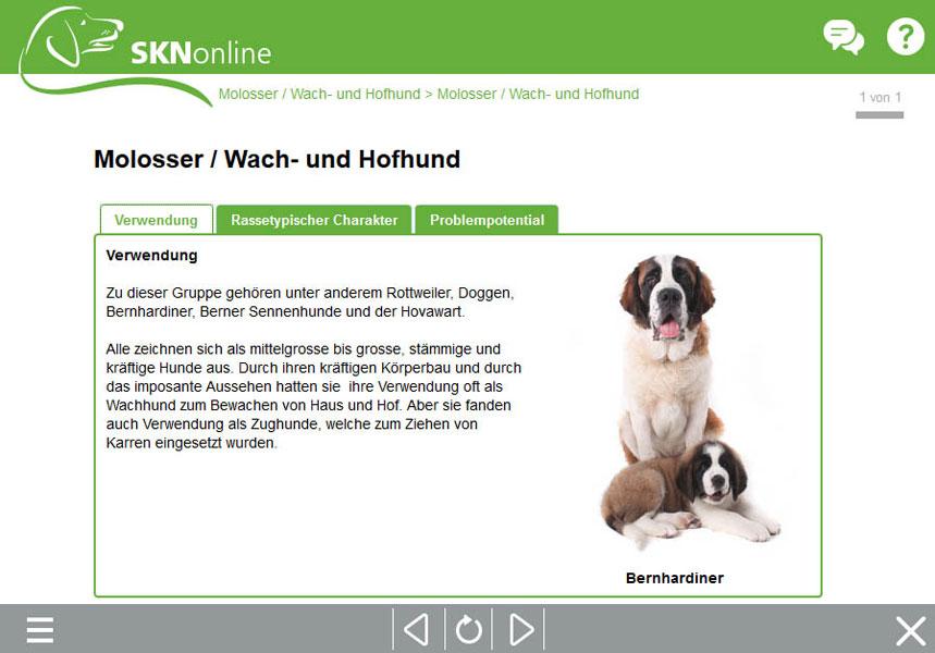 Hundekurs, Sachkundenachweis Hund, online Hundeschule, SKN Theorie