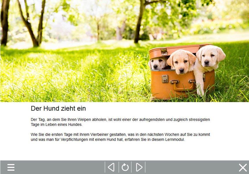 Hundekurs, Sachkundenachweis online, SKN Kurs