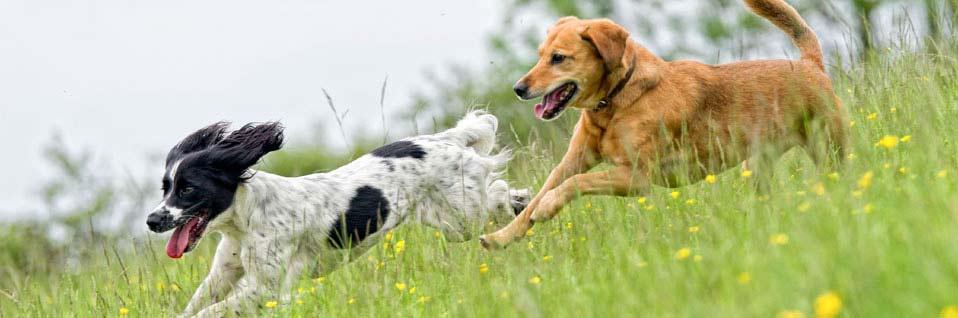 online Hundeschule, Sachkundenachweis Hundehalter, Hund kaufen, Hundekurs
