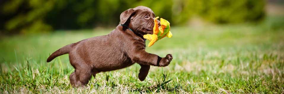 Sachkundenachweis, SKN Hundehalter, SKN Kurs, online Hundekurs