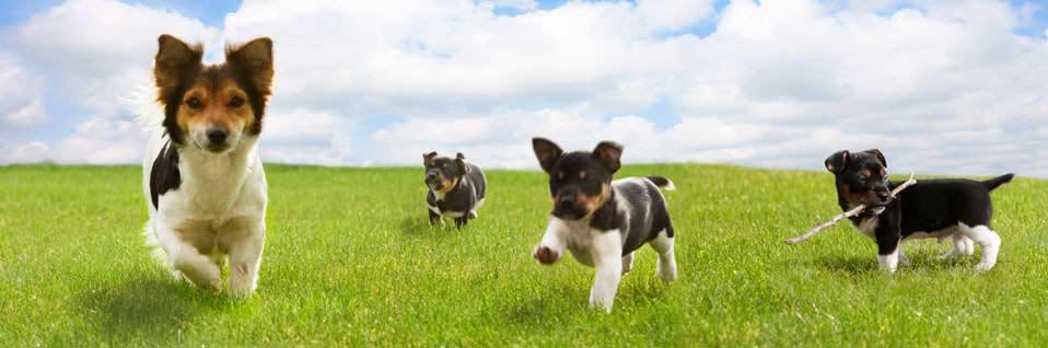 Sachkundenachweis Hund, SKN-Kurs online machen, Hundeschule online, SKN Theorie