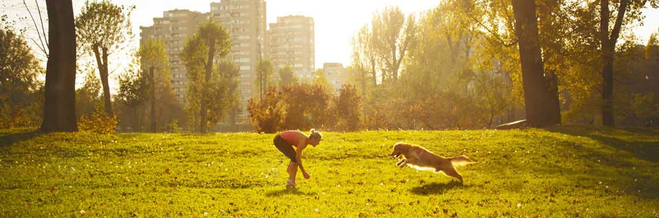 SKN Kurs, Sachkundenachweis online, Hundeschule