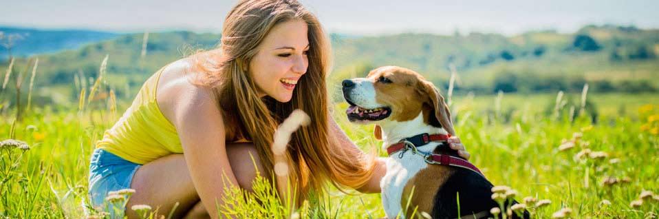 Sachkundenachweis Hund, SKN Kurs, Hund kaufen, Hund, Hunde, Hundekurs online
