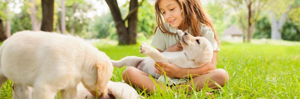 SKN Kurs online, SKN Hund, Sachkundenachweis, Hundeschule online