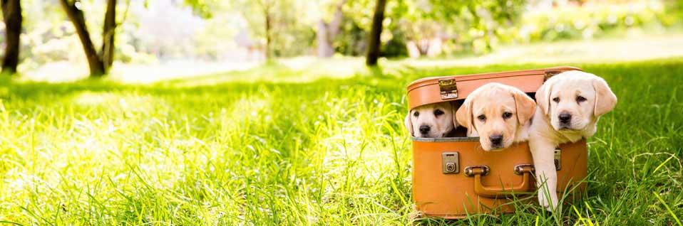 Sachkundenachweis, SKN-Kurs, online Hundeschule